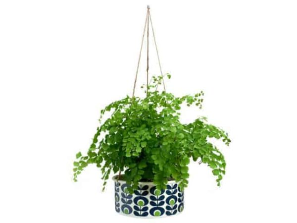 Orla Kiely Large Hanging Plant Pot Apple Main