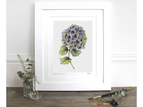 "Toasted Crumpet Hydrangea 10x12"" Mounted fine art print"
